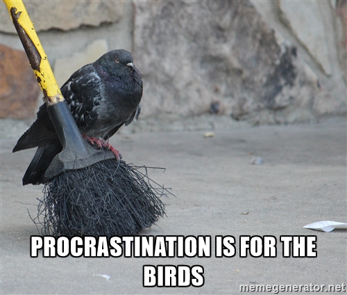 procrastination-meme-bird